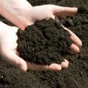 Zaszczepianie gleby