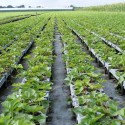 Zaprawianie sadzonek i nasion