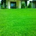 Trawniki