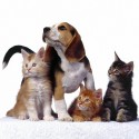 Żywienie i pielęgnacja zwierząt